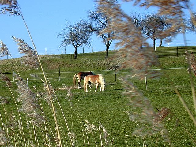 Weidenkoppel mit Pferd